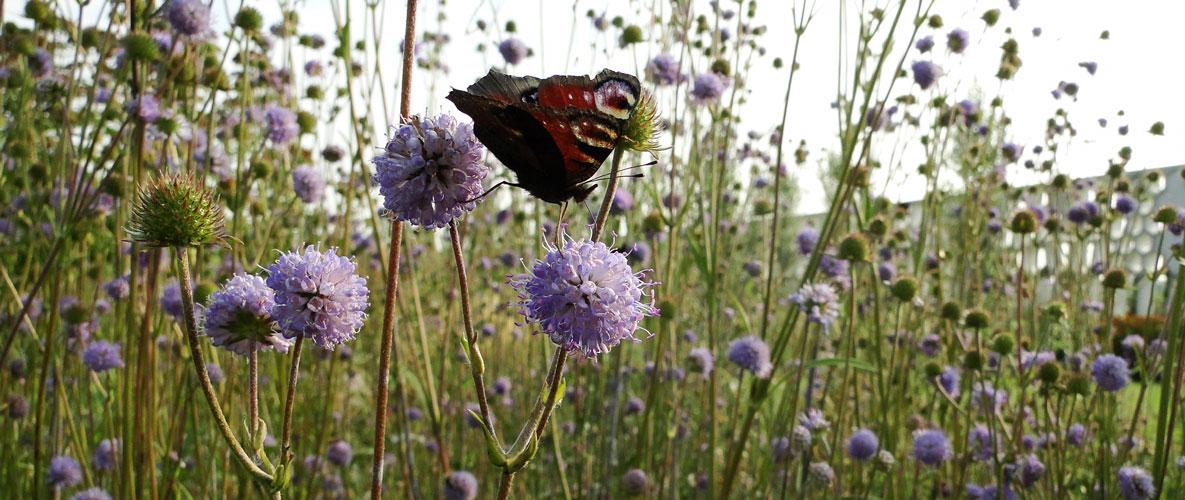 vlinder-pergola